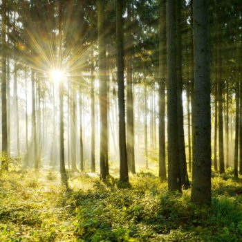 Holz - der natürliche Baustoff